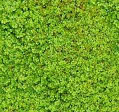 Garden Moss Indoors - Moss Close Up
