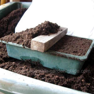 starting seeds - proding compost with fingers