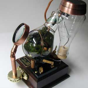 Unusual House Plants - Steamed Glass Terrarium